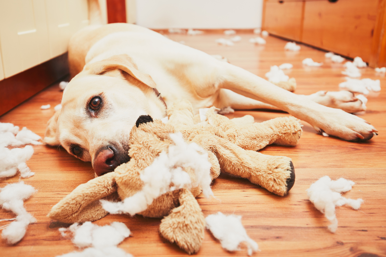 The 10 Best Homemade Dog Toys